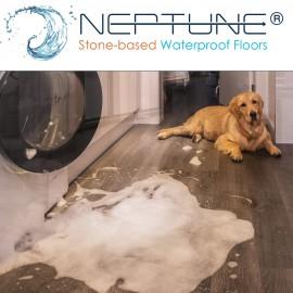 Neptune Has Landed